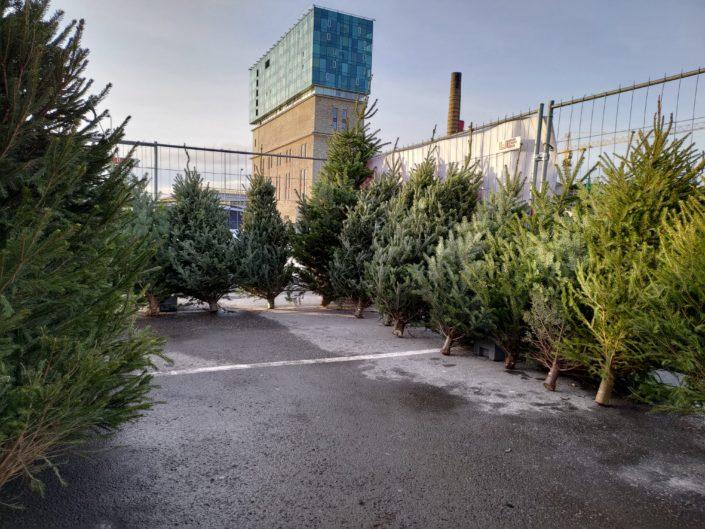 Jõulukuuskede müük Tallinnas